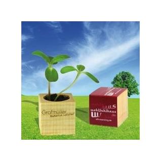 Plantje in houten kubus